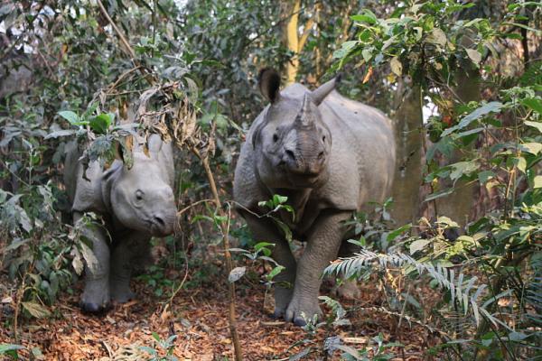 Мама с дочкой. Читван